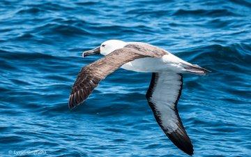 вода, полет, крылья, чайка, птица, lynn griffiths