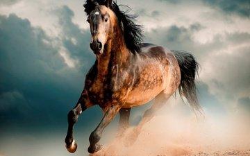 лошадь, пустыня, конь, мустанг, скакун