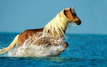 лошадь, море, брызги, конь, грива, бег