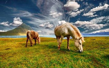 the sky, grass, clouds, pair, horse, horses, pasture