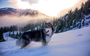 face, trees, snow, nature, winter, look, dog, ate, husky