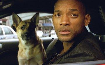 взгляд, собака, актёр, лицо, немецкая овчарка, уилл смит, я-легенда