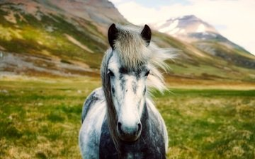 horse, mountains, landscape, valley, iceland, bokeh