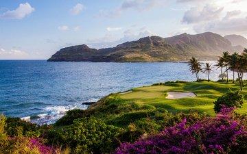 цветы, трава, горы, природа, берег, пейзаж, море, пальмы, франция