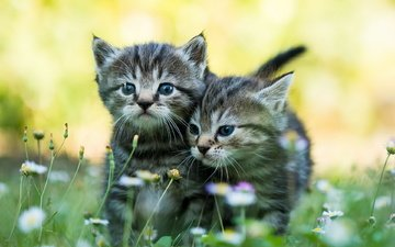 flowers, grass, mustache, look, cats, kittens, faces
