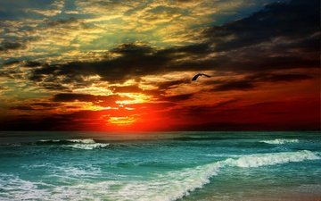 небо, облака, вечер, солнце, природа, берег, волны, закат, море, чайка, птица