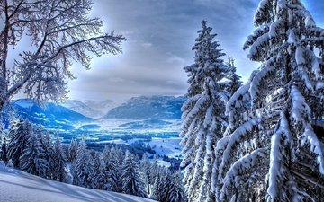trees, mountains, snow, nature, forest, winter, landscape, spruce, alps, mountain relief