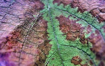 природа, макро, осень, лист, прожилки, крупный план