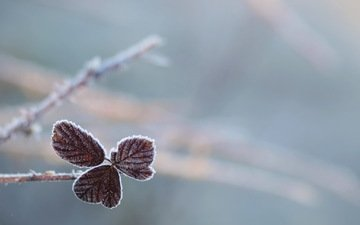 leaves, branches, frost, bokeh