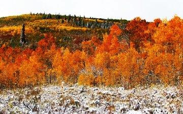 деревья, снег, лес, листья, осень, холм