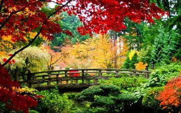 trees, nature, plants, leaves, landscape, park, bridge, autumn
