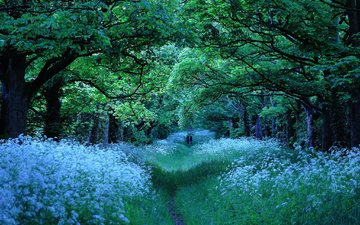 road, flowers, trees, park, branches, walk, alley