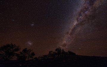 небо, ночь, деревья, звезды, силуэты, млечный путь