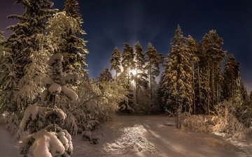 road, night, trees, snow, forest, winter, the moon, russia, pine, fedor lashkov