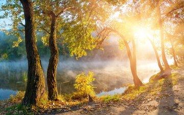 деревья, озеро, солнце, туман, рассвет, осень, олнце