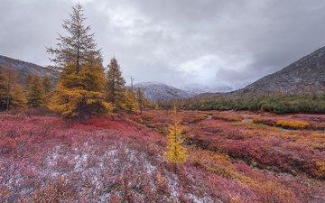 the sky, trees, mountains, plants, landscape, autumn, russia, tonya andreeva, kolyma