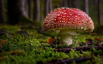grass, nature, mushroom, moss