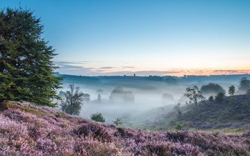 trees, hills, nature, morning, field, fog, heather