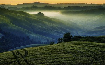 grass, trees, sunrise, hills, nature, landscape, fog, the bushes, mountain, spring, valley