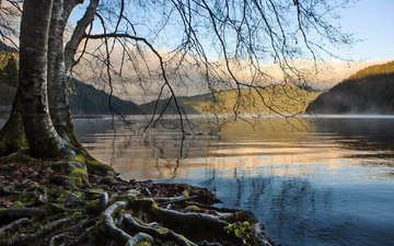 the sky, trees, lake, mountains, landscape, branches, roots