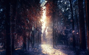 trees, snow, nature, forest, winter, morning, fog, the sun's rays