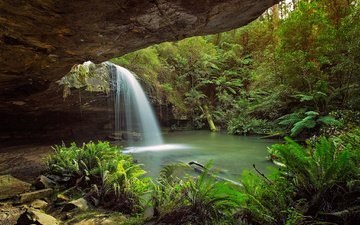 trees, rocks, nature, forest, waterfall, tropics