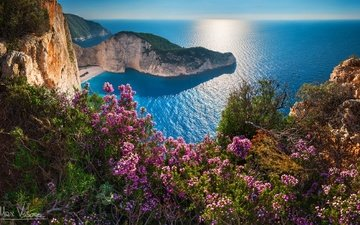 flowers, rocks, sea, coast, greece, bay of navagio, navagio beach, island of zakynthos, shipwreck