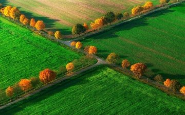 trees, field, the view from the top, autumn, germany, north rhine-westphalia, nottuln