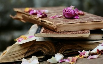 flowers, roses, petals, books, stack, page