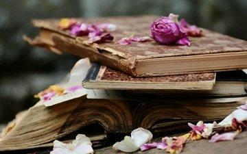 цветы, розы, лепестки, книги, стопка, страницы
