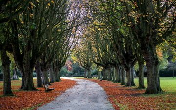 trees, park, foliage, autumn, england, bench, alley, oxford, cowley