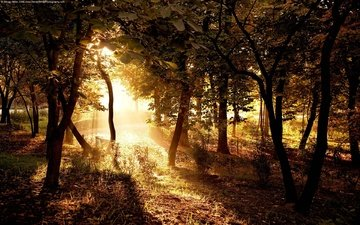 trees, the sun, forest, rays, track, sunlight