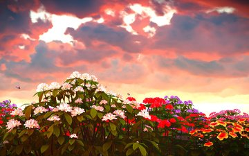 flowers, clouds, nature, sunset