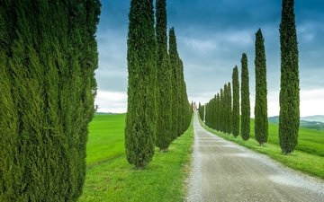 the sky, road, grass, trees, italy, tuscany, cypress