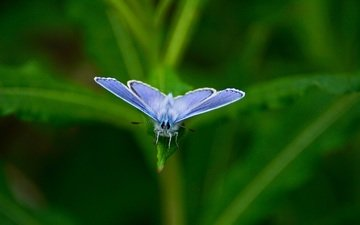 leaves, insect, butterfly, wings, blur, plant, blue