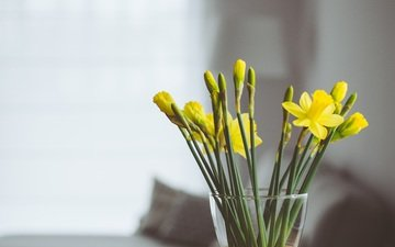 flowers, bouquet, vase, daffodils, yellow
