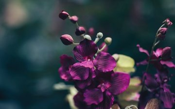 macro, flower, petals, purple