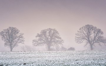 trees, snow, nature, winter, landscape, field