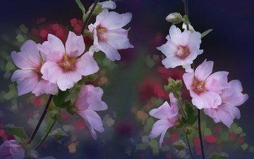 цветы, лепестки, стебли, мальва, мальвы