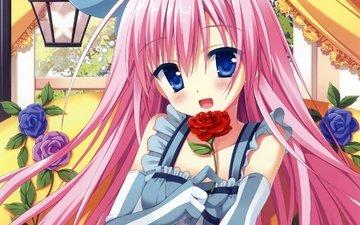 цветок, роза, красивая, sugoi, hana, japanse, каваи, бисёдзё