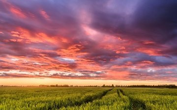 the sky, clouds, sunset, field, netherlands, track