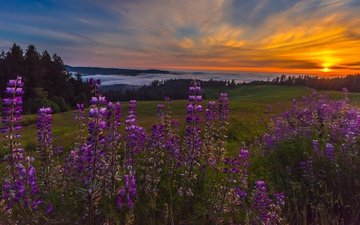 the sky, flowers, clouds, the evening, mountains, the sun, hills, nature, forest, sunset, mood, landscape, fog, field, summer, beauty, meadow, ate, lupins