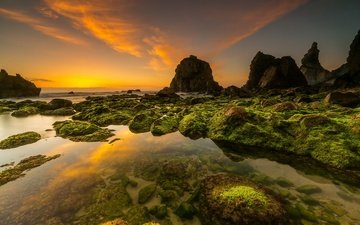 rocks, shore, sunset, sea, coast, portugal, algae