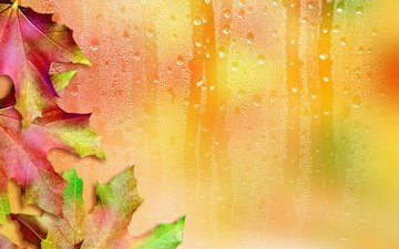 leaves, drops, autumn, glass, maple, maple leaf