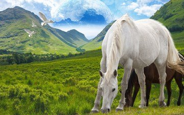 the sky, grass, clouds, mountains, nature, birds, horse, horses, pasture