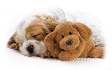 dog, sleeping, toy, puppy, nose, cocker spaniel