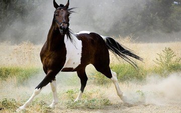 horse, nature, dust, running, tail