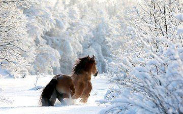 horse, trees, snow, forest, winter, branches
