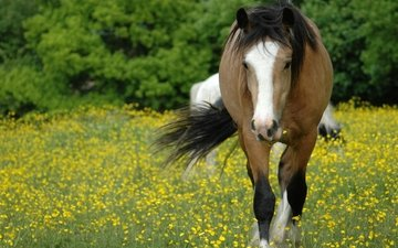 face, flowers, horse, grass, glade, meadow, mane