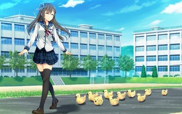 duck, school uniform, visual novel, anime girls, sorairo innocent, tsukigase mahiru, thigh-highs